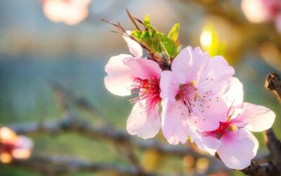 Natura & Espiritualitat.  La primavera ha arribat